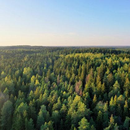 Meža platības, ar dažāda vecuma kokiem